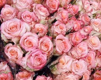 Rose Photography - Pink Roses Print - Copenhagen Photography - Flower Market Art - Floral Wall Decor Blush Pink - Denmark Travel Photography