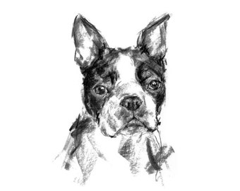 Boston terrier portrait - fine art dog print