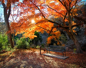 Everything in this life has a purpose   Lost Maples Natural Park