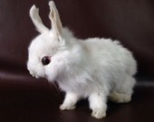 taxidermy of rabbit ,bunny, cute  white bunny