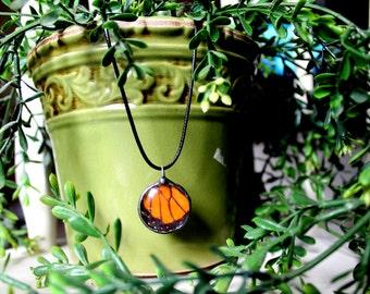 Monarch Butterfly Wing Pendant, Real Butterfly Jewelry, Orange Butterfly