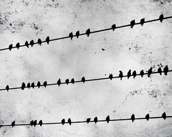Birds on a Wire Photograph, Black and White Bird Print, Whimsical Modern Black Birds on A Wire 8x10 and up