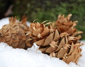 25 Douglas Fir Pinecones - Natural Pine Cones - Holiday Decorations - Christmas Ornaments - Woodland Rustic Decor