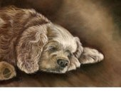 Comere the Cocker Spaniel- a pastel drawing from artist Wendy Leedy's dog collection- fine art print, signed
