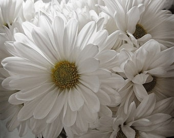 Daisy Photo, Daisy Print, White Flowers, Floral Photography, Fine Art Photography, Cottage Chic Decor, Shabby Decor, Kitchen Decor, FPOE POE
