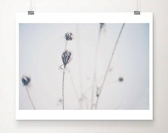 winter photograph nature photography snow photograph frost photograph blue home decor winter print minimalist decor snow print