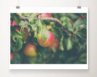 apple photograph food photography apple orchard print kitchen wall art fruit photograph fall photograph
