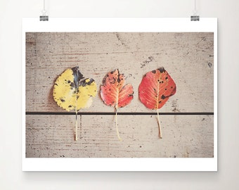 red leaf photograph fall photograph rustic decor yellow leaf print fall print still life photograph nursery wall art
