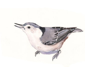 Nuthatch watercolor painting PRINT OF Watercolor Painting 5 by 7 print, bird art, - N6615 - wall art, home decor