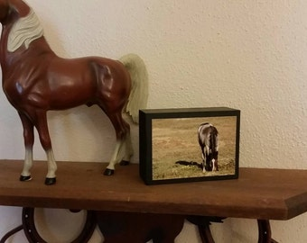Wild Horse Photography of wild horse foal - wood block