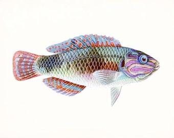 A Natural History of Fish Coastal Decor Giclee Print No. 1