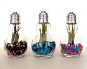 DIY Kit Trio of Light Bulb Terrariums Mixed Colors