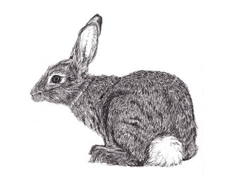 Rabbit Ink Illustration Print 8 x 10
