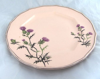 Antique Taylor Smith Taylor Unique Dinner Plate 1800s Pink with Purple Thistle flowers Victorian Rare Design
