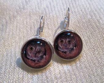 Shy Owl  Earrings