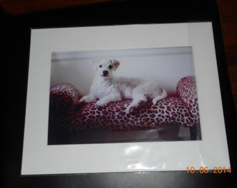 dog laying on leopard bench photo print photography 11x14