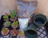 6 Pack Assorted Succulents With Potting Kit