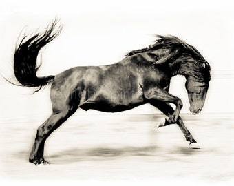 SPIRIT, SPANISH STALLION,  Edition Print, Wall Decor, Equine art, Horse Photography,