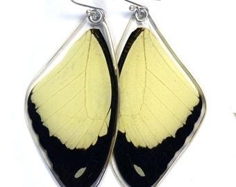 Real Flying Handkerchief Swallowtail Butterfly (Papilio dardanus) (top/fore wings) earrings