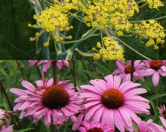 Butterfly Garden Seeds//Host and Nectar Plants for Butterflies