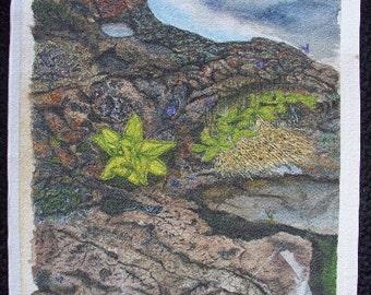 Watercolor Flower on Cliff Background - Butterwort, a CarnivorousL Plant