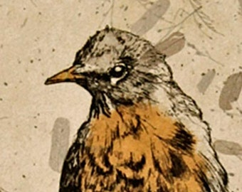 Sign of Spring is an original print of an zinc plate etching of a robin drawn and  hand pulled by the artist,
