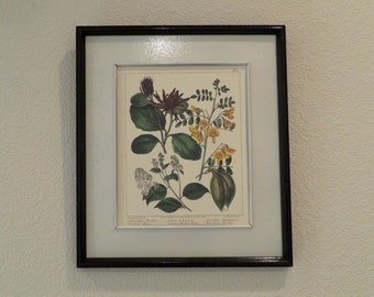 Vintage Botanical Print with mat and frame included