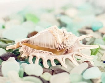 Beach Glass Photography - Sea Glass Photograph - Shell Photograph - Sea Glass - Fine Art Photography Print - Green Blue White Home Decor