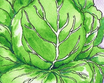 Cabbage Watercolor Print