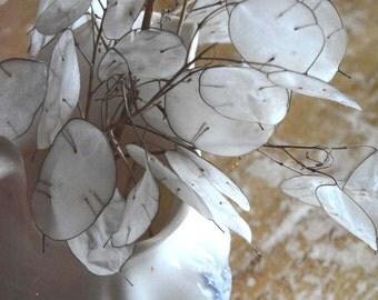 Money Plant Seeds Lunaria Seeds Organic Lunaria Seeds Heirloom Seeds Cottage Garden Favorite