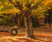 Tree Swing -  Fall Photography, Nature, landscape photography, fall, swing, fine art, leaves, art, farm, rustic, home decor, new england