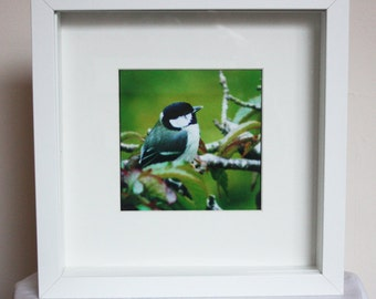 Great Tit bird box-framed photographic art - photography - framed print - garden - Down, Ireland -  10x10 inches, 5x5 inches