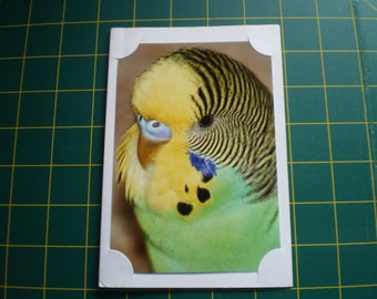 Bird and Animal Photo cards 17cm X 11.5cm including envelope