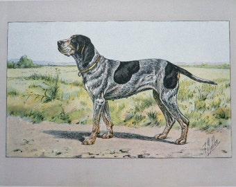 ANTIQUE 1907 GERMAN POINTER Wurtemberg signed dog print Chromolithograph Mahler German artist  Rare Collectors item Christmas, Birthday gift
