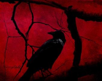 RED NIGHT RAVEN Photo Surreal Black Bird Art Print Halloweeen Black and Blood Red Forest Photography Black White Raven Grunge Print