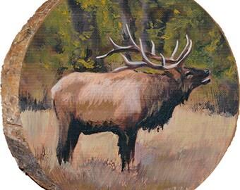 Staring Elk - DAE006