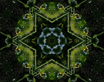Frog Kaleidoscope, Fine Art, Photo Art, Digital Art, Abstract Art, Nature Photography