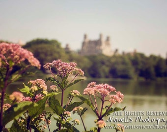 View of New York Over Central Park and Lake - Pink Flowers - Urban City and Nature - Home Decor Photography Print