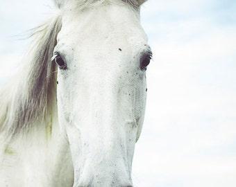 Pretty horse Photograph