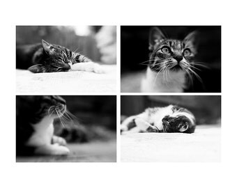 cat photograph black and white photograph kitten photograph animal photography tabby cat photograph cat portrait cats whiskers