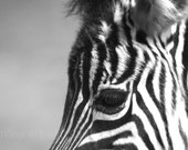 Zebra Photograph, Black and White Animal Wall Print, Living Room Decor, Nursery