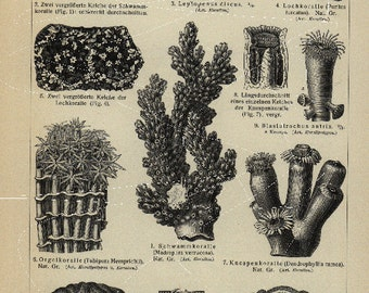 Original Antique German Encyclopeida Black and White Sealife Print- Ocenlife- Korallen- Corals