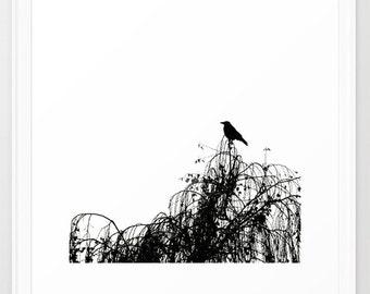 Black Bird - Framed Art Print - Scoop White MEDIUM 22x22 inch - Photography Nature Modern Art Abstract