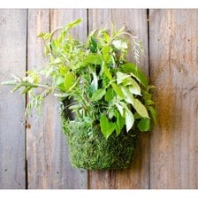 Containers Amp Planters In Outdoors Amp Garden Etsy Home