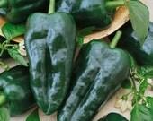 50 - Heirloom Hot Pepper Seed - Ancho Grande or Pablanos Seed - Heirloom Pepper Seed, Heirloom Ancho Grande Seed, Heirloom Pablanos, Non-gmo