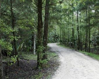 Through The Florida Woods Photographic Print