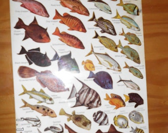 Vintage Fishwatcher's Field Guide Card 1979