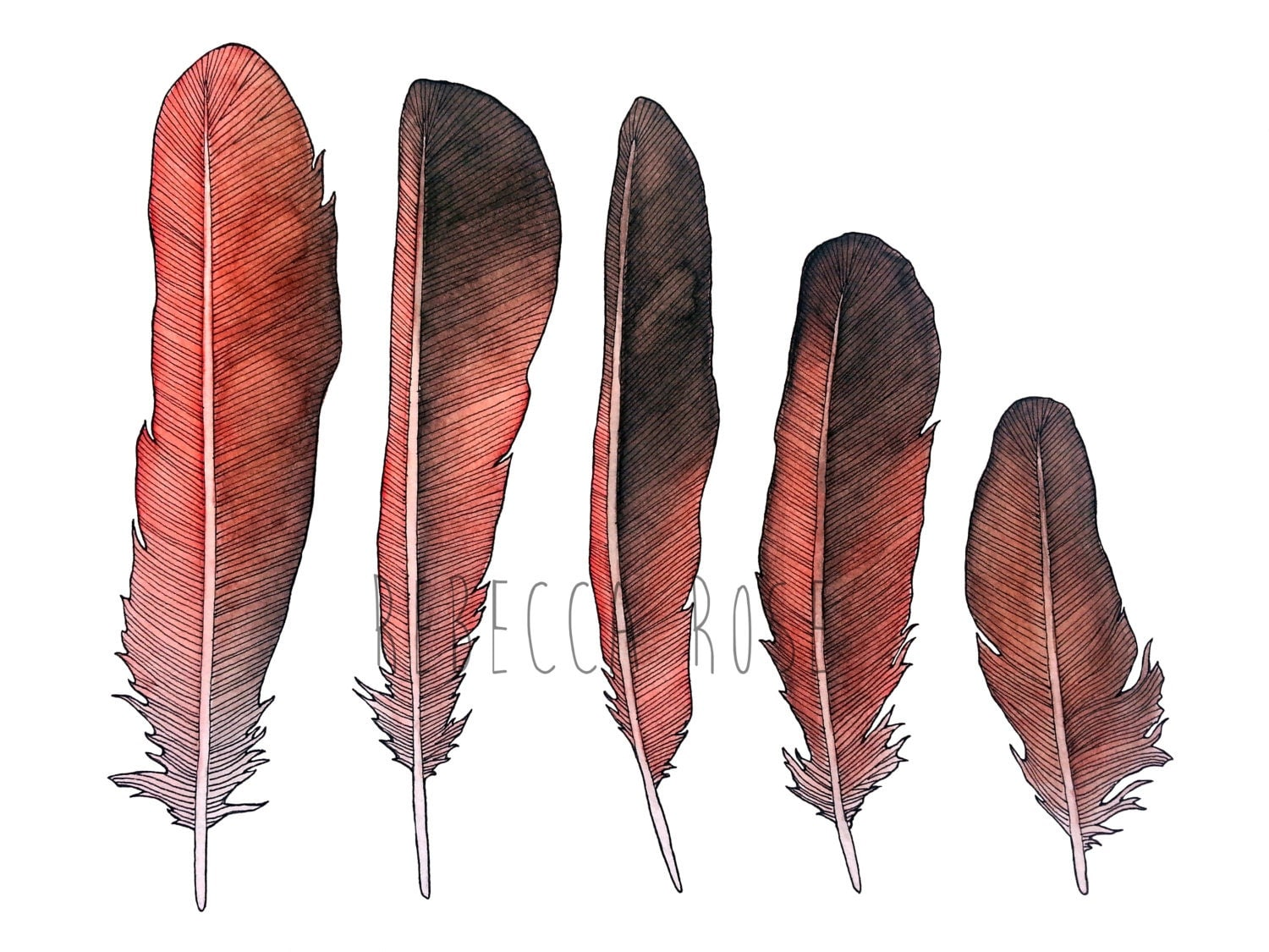 Different bird feathers - photo#34