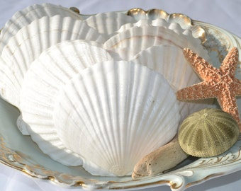 "Irish Baking Shells, Irish Scallop Shells (4"") 