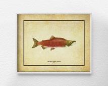 Salmon Art, Salmon Decor, Salmon Print, Beach Decor, Marine Life Decor, Ocean Art, Bathroom Art, Nautical Decor, Coastal Decor, 0295